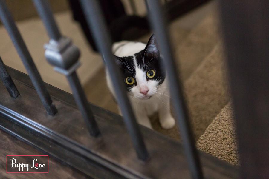 Lethbridge PAW Society curious cat