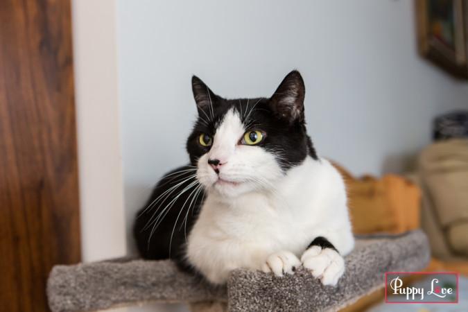 PAW Society cat photo