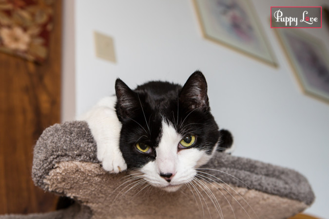Cute PAW Society cat photo