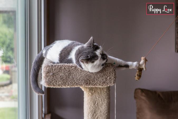 Lethbridge PAW Calendar cat playing