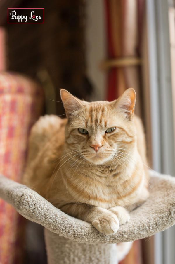 PAW Society cat
