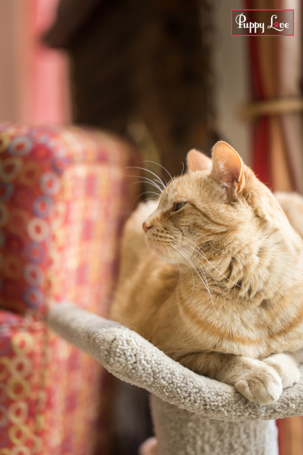 Lethbridge PAW Calendar cat