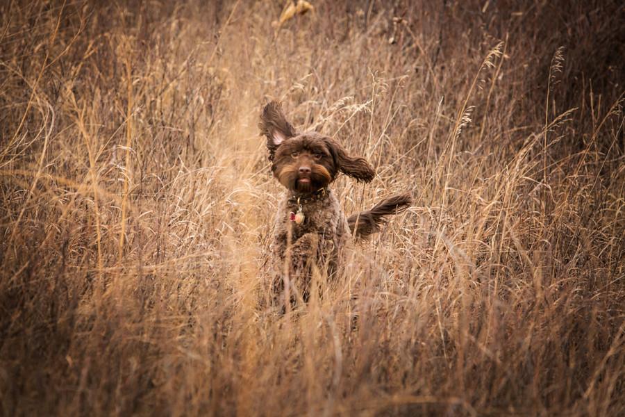 Playful dog running