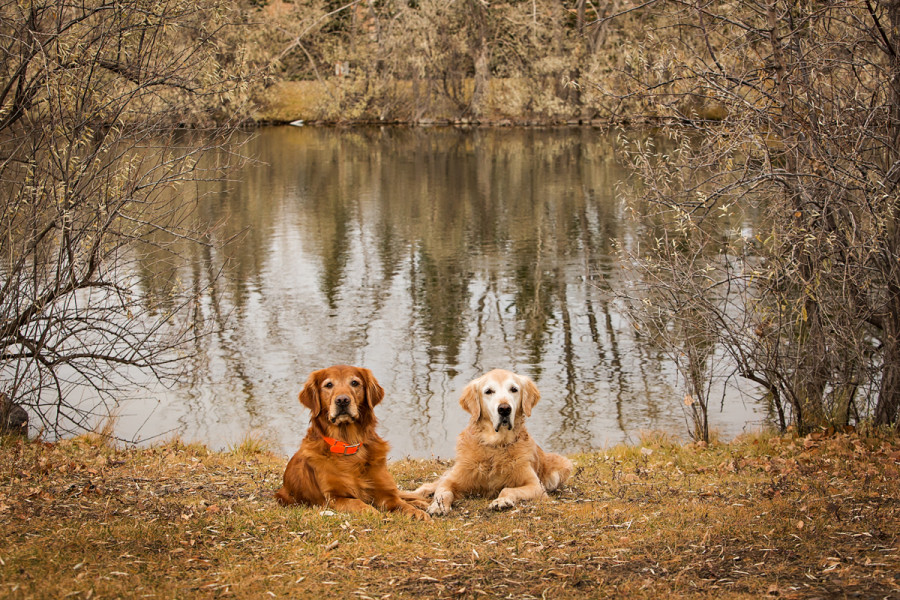 Dogs relaxing by the lake