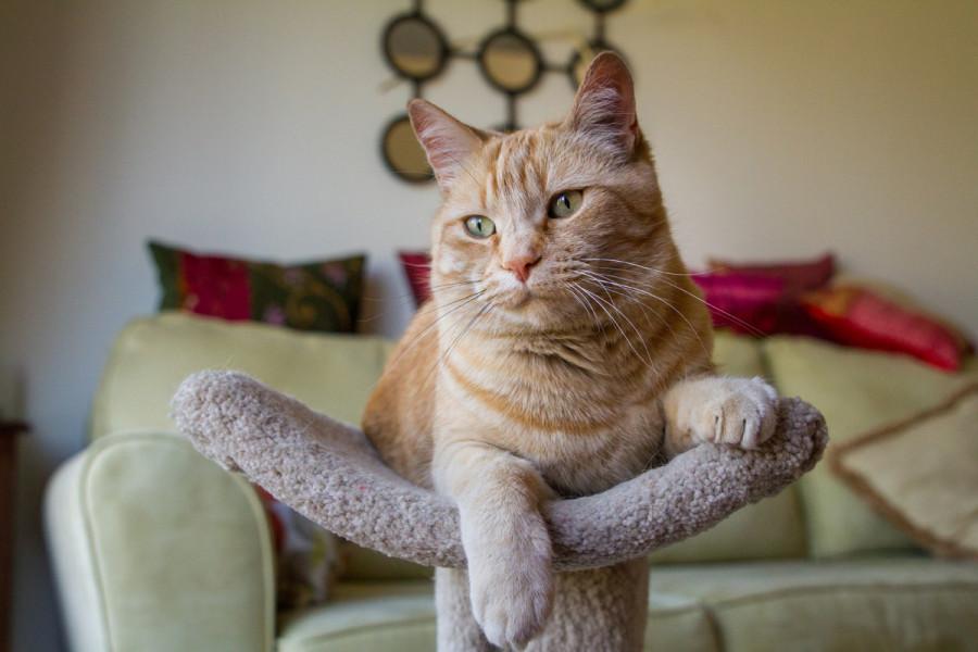Orange PAWS rescue Ziggy relaxing