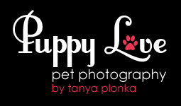 Fun Lethbridge Pet Photography (Puppy Love Pet Photography)