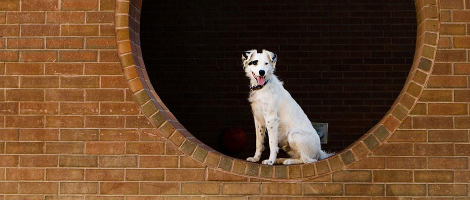 white-dog-sitting-circle