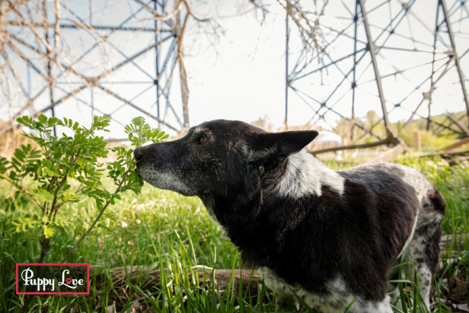 Senior dog smelling flowers in Lethbridge river bottom
