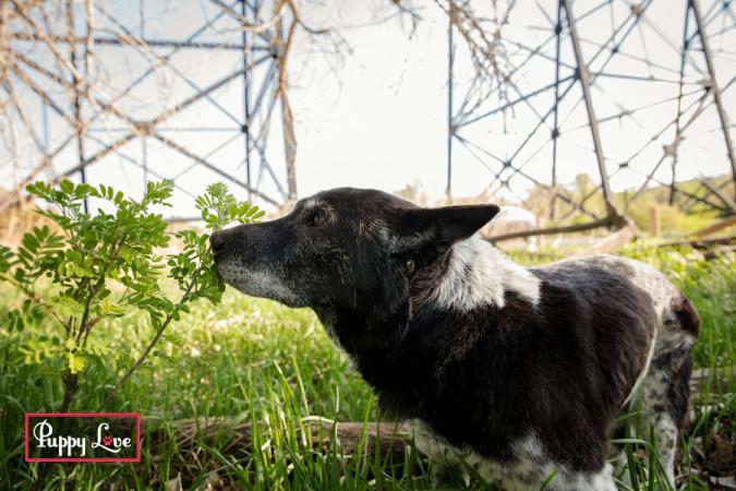 Senior dog smelling flowers in Lethbridge river bottom