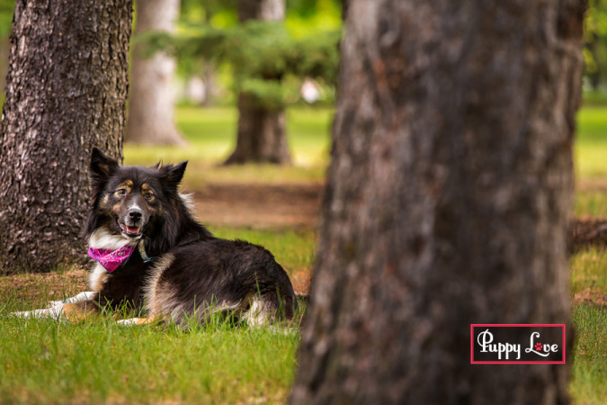 Adoptable older dog through AARCS in Lethbridge