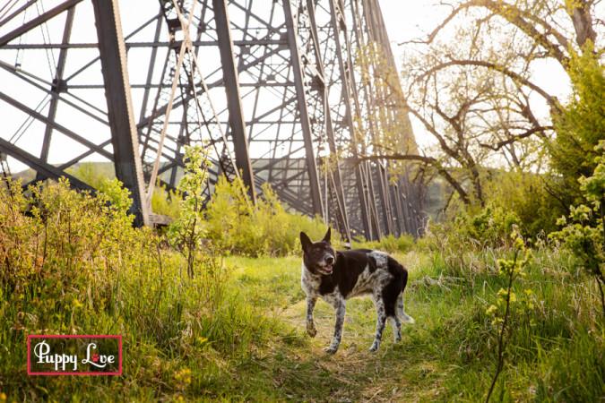 Senior dog in Lethbridge river bottom at sunset