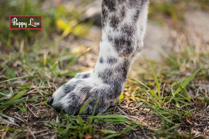 Close up of dog foot