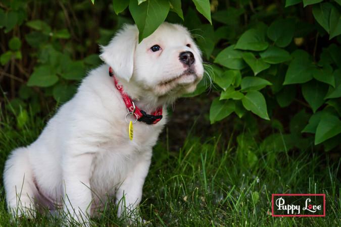 summer dog photos Lethbridge