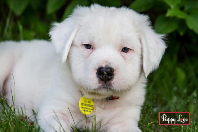 summer puppy photography Lethbridge
