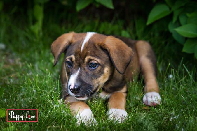 summer pet photography Lethbridge