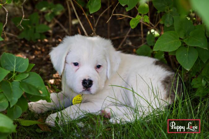 Lethbridge animal rescue photography