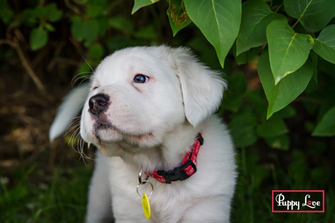 outdoor Lethbridge pet photography