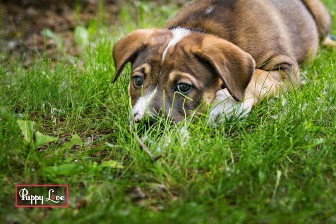 summer puppy photos Lethbridge