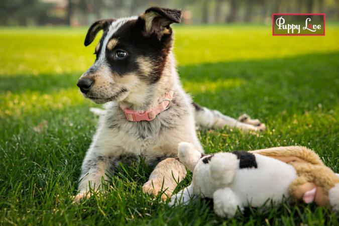 Lethbridge cute puppy portraits