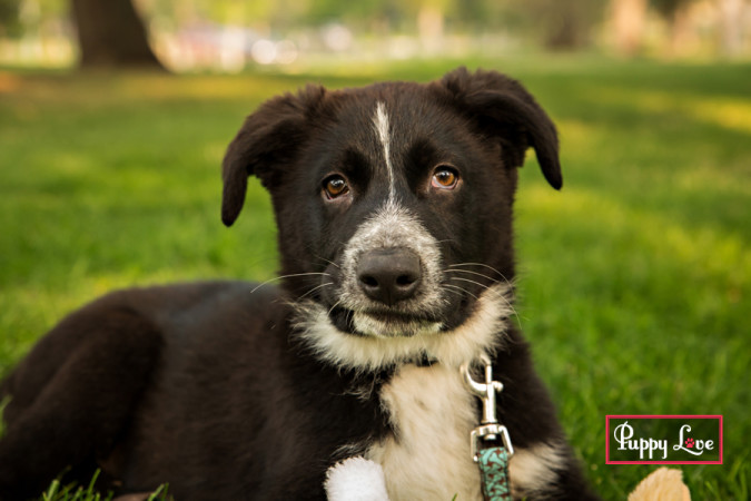 Lethbridge cute puppy photos