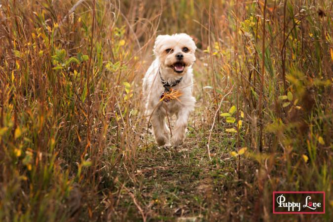 Popson Park senior dog photos