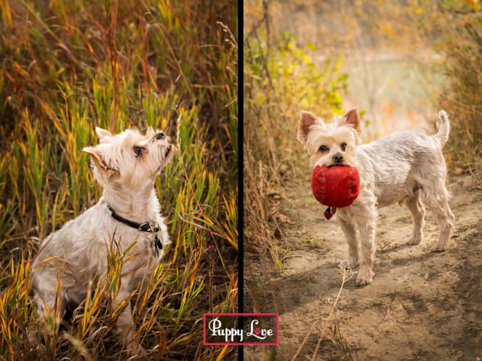 Popson Park senior dog photo session