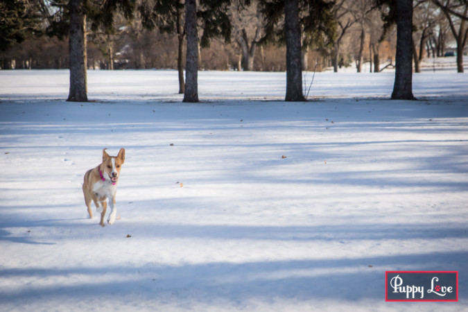 Lethbridge winter dog photos