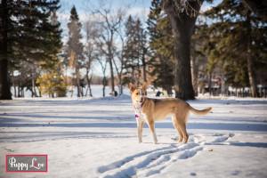 Lethbridge winter dog photos