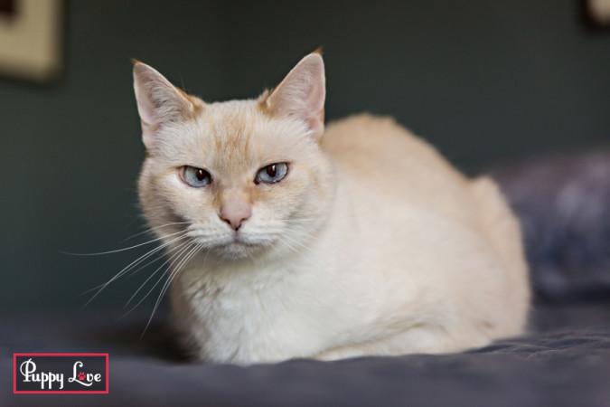 cute white cat in Lethbridge