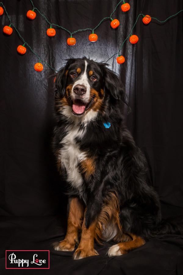 Windy City Canine Rescue Lethbridge Halloween fundraiser