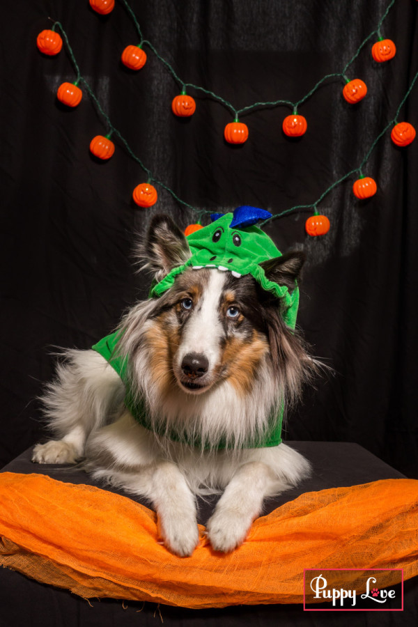 Windy City Canine Rescue Lethbridge fundraiser