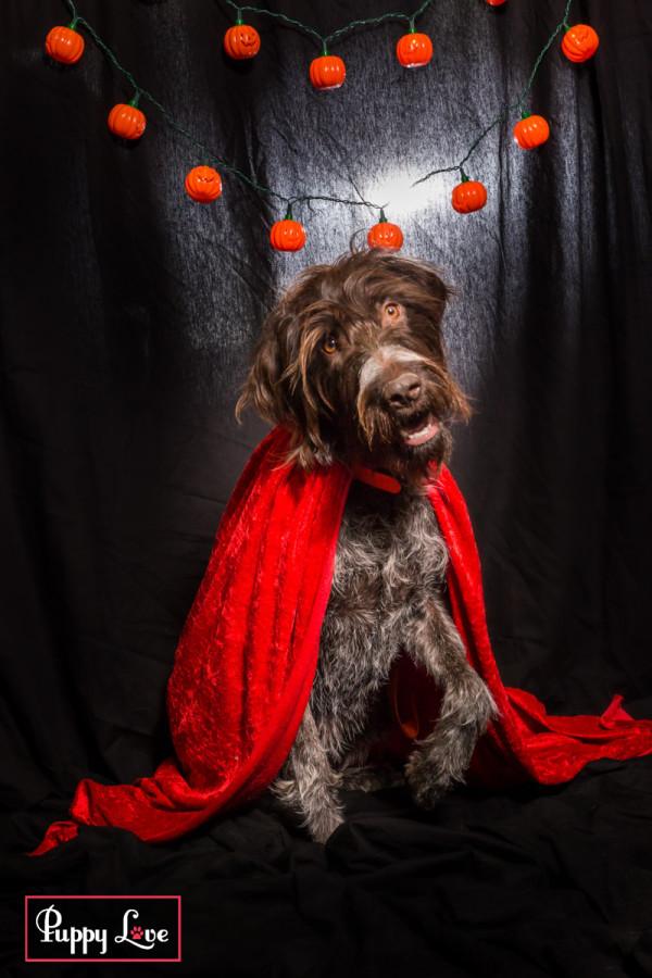Lethbridge Halloween pet portraits