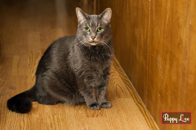 cute Lethbridge cat photography