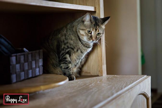 Lethbridge indoor pet photos