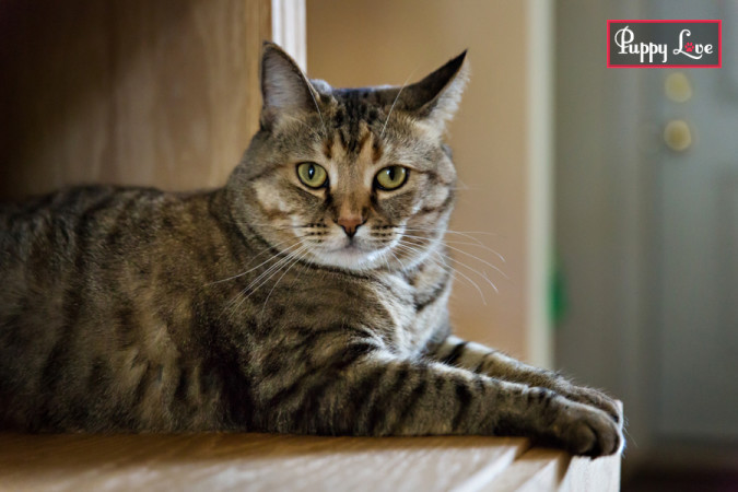 rescue cats in Lethbridge