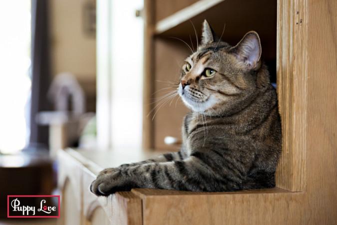 tabby cat sitting on cupboard