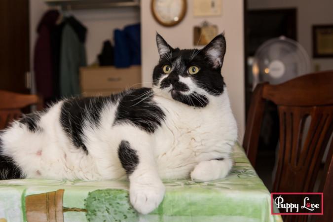 thomas-lethbridge-cat-photos-01