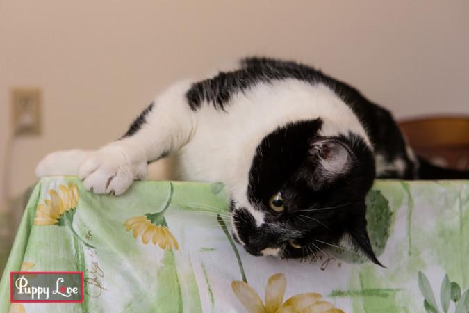 playful kitty in Lethbridge