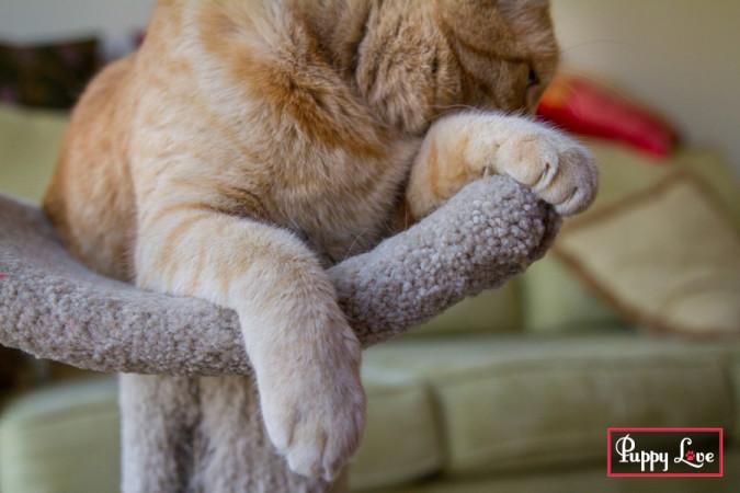 Cute detail of orange cat feet