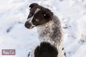 Alberta winter puppy rescue
