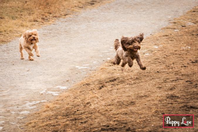 Lethbridge off leash dog park