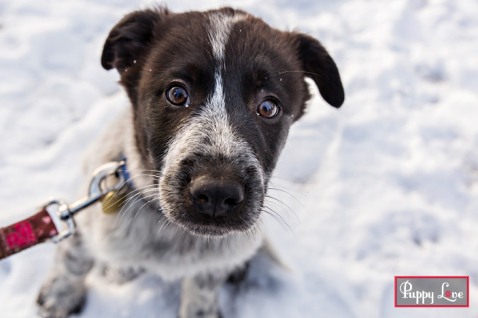 Outdoor winter pet portraits
