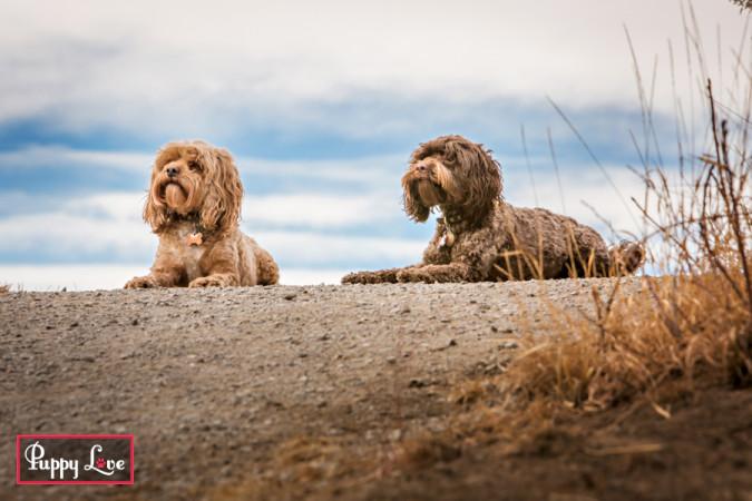 off leash dog park Lethbridge Popson Park