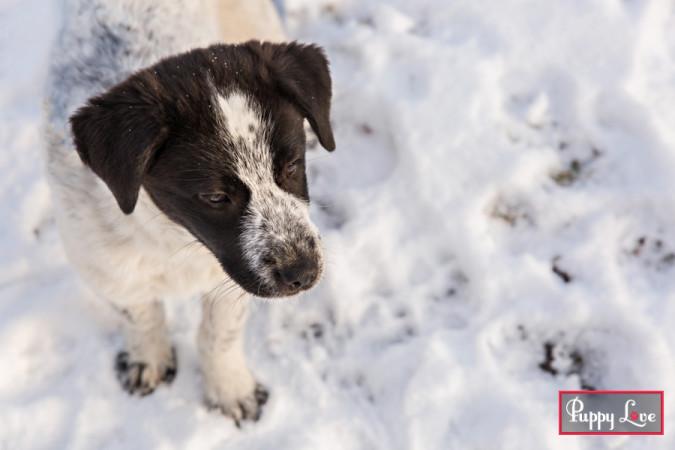Lethbridge outdoor winter pet photography