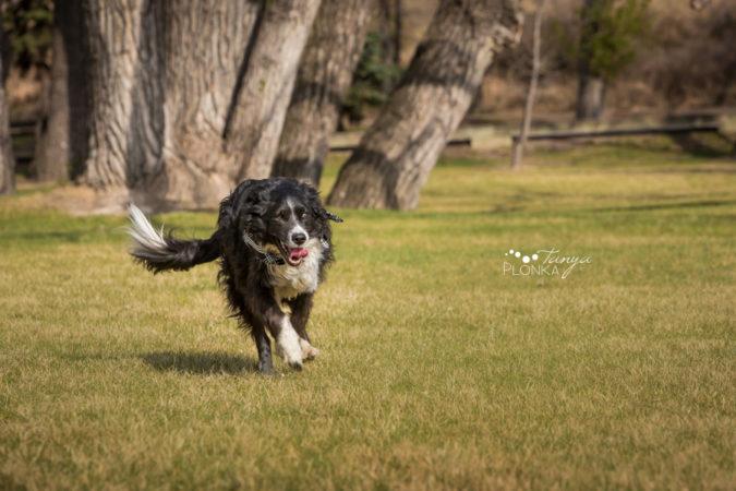 Taber Senior Dog Photo Session