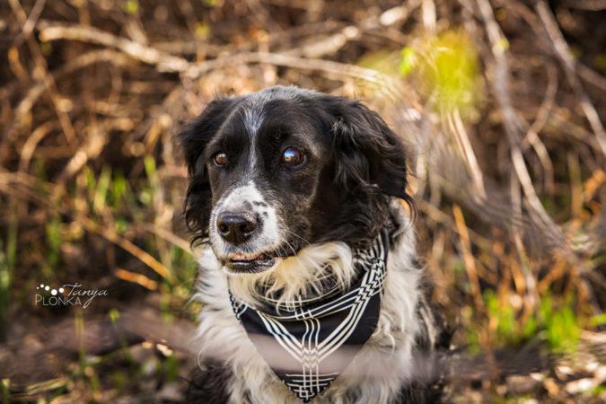 MD Park of Taber dog portraits