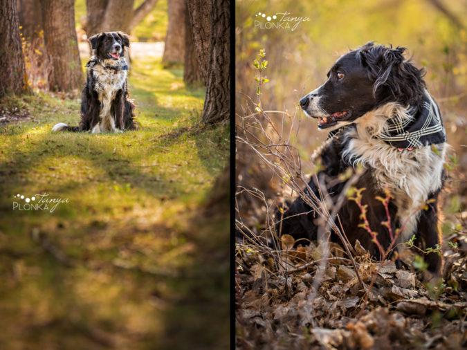 Senior pet photo session