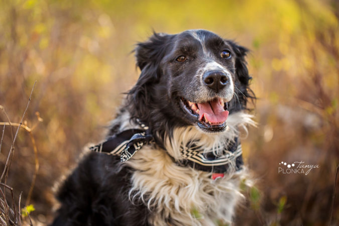 Senior pet photography