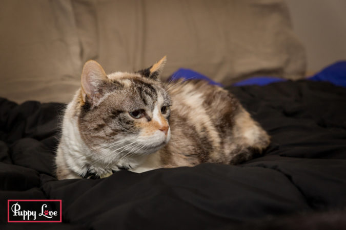 Lethbridge senior cat photography