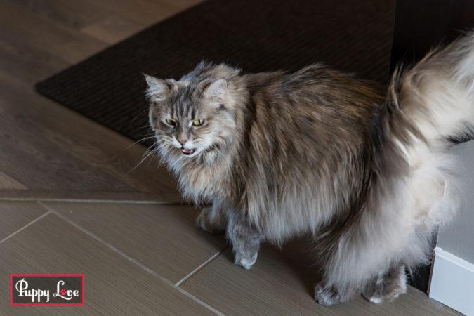 Lethbridge indoor pet session
